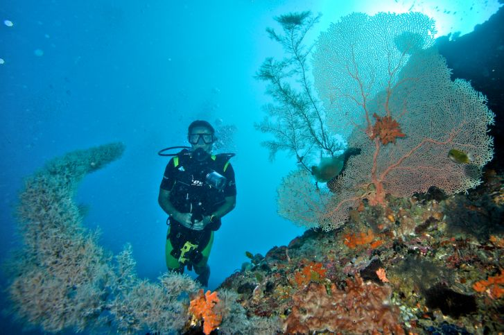 Diving the gaps in Pemba Island, Tanzania.
