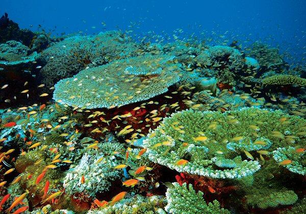 The reef at Manta Point - Pemba Island, Tanzania.