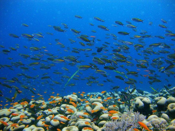 Zanzibar Scuba Diving