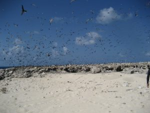 Picture of Sea Birds on Latham Island