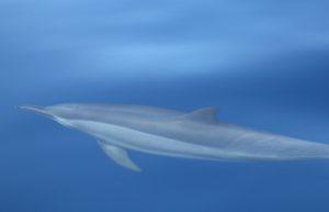 Zanzibar Whale Watching