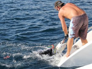 Zanzibar Big Game Fishing releasing a sailfish