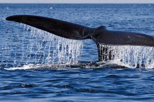 Zanzibar Whale Watching Whale Tail